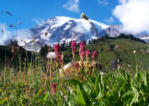 Paradise, Mt. Rainier, Late August Flowers